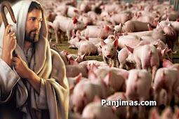 Apakah Kristen Boleh Makan Babi Menurut Alkitab? Baca dan Sebarkan Bagi Umat Kristen...
