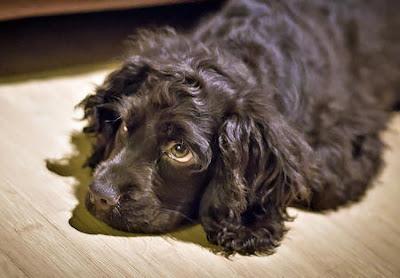Los 10 mandamientos del dueño de un perro - imagen de perro