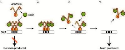X Mengungkap Mekanisme Pertahanan Diri Bakteri Sinar-X Mengungkap Mekanisme Pertahanan Diri Bakteri