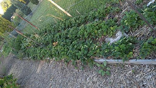 Annau0027s Selbstversorgergarten