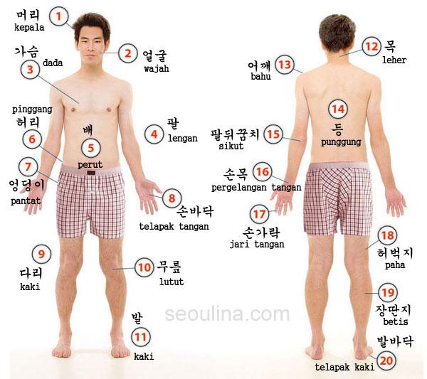 nama bagian tubuh dalam bahasa korea