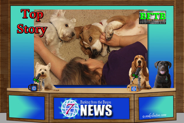 BFTB NETWoof News Top Story~ Dogs prefer belly rubs