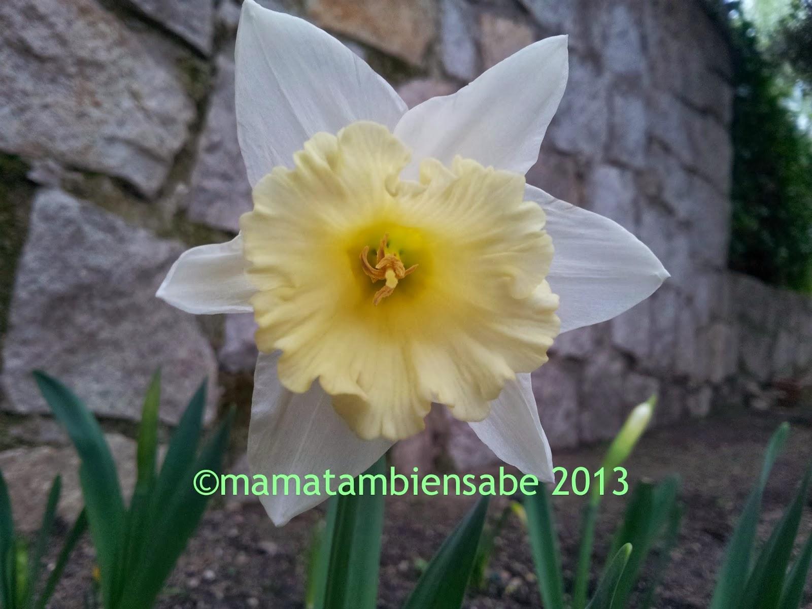 Una flor sonrisa