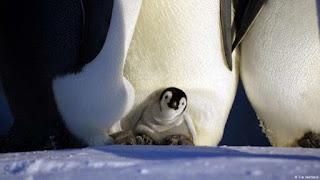 Fascinante Antártida: fatos sobre a região mais austral do mundo