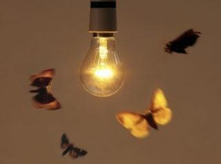 Insectos hacia la luz