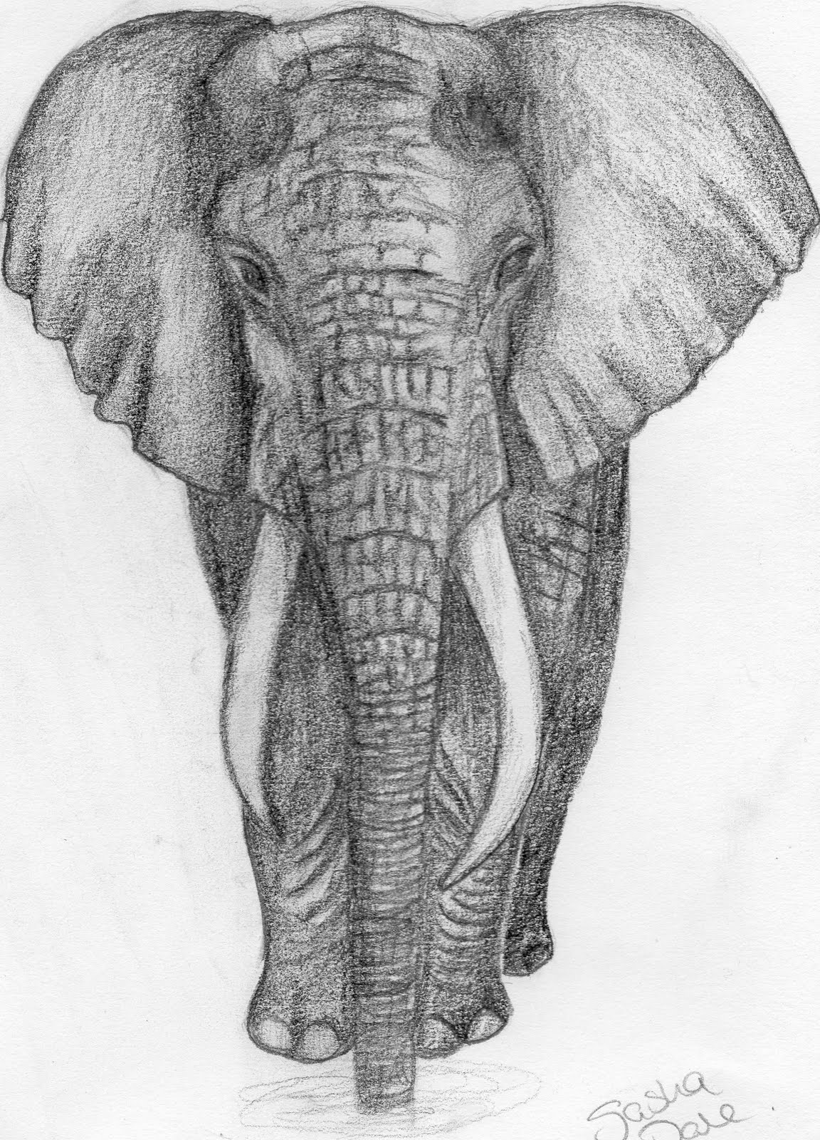elephant face drawing - photo #8