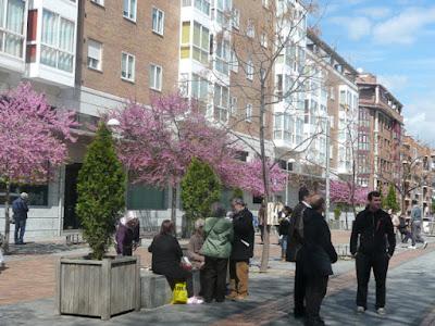 Plaza de las Palomas, vecinos charlan, árboles floridos en rosa