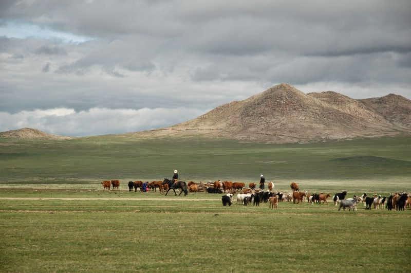 Nómadas mongoles a caballo
