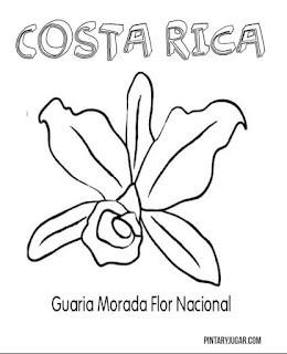 colorear  Guaria Morada
