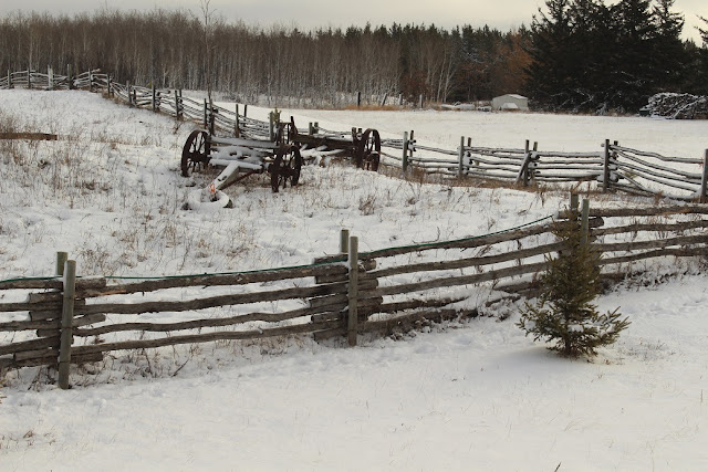 Rail Fence and Wagon Wheels in the snow