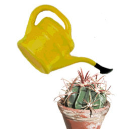 cactus practice kakteen und sukkulenten blog 2012. Black Bedroom Furniture Sets. Home Design Ideas