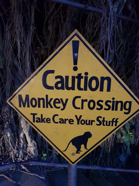 Monkey crossing-Ubud-Bali
