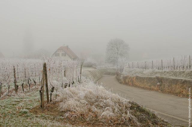 Mittelbergheim viñedos helados Alsacia
