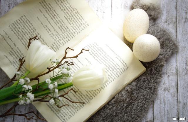 sách và hoa trắng