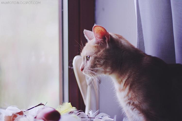 kot, koty, rudy kot, rude koty, fotografia kotów