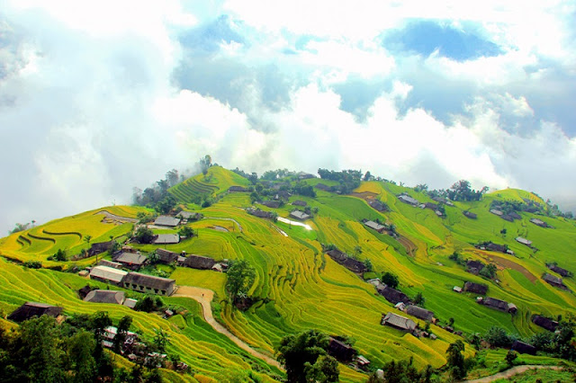 Cross the slope pass to Phung village to see the ripe rice paddies 4