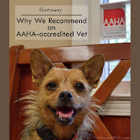 Giveaway: Why We Recommend an AAHA-accredited Vet