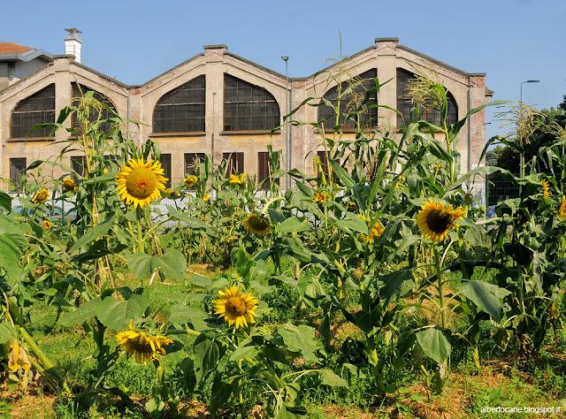 Milano, gli orti condivisi di via Padova