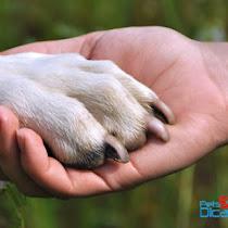 Mensagem De Despedida De Cachorro Pets E Dicas