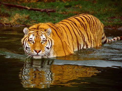 Amazing Facts About Sundarban in Hindi
