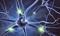 Tau Not Amyloid-Beta Causes Neuronal Death in Alzheimer's Patients