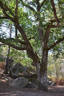 Quand un cerf apparait dans un arbre