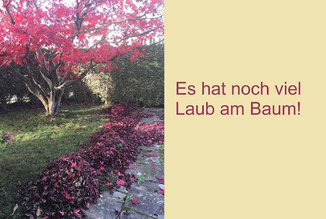 Ahorn mit Blättern