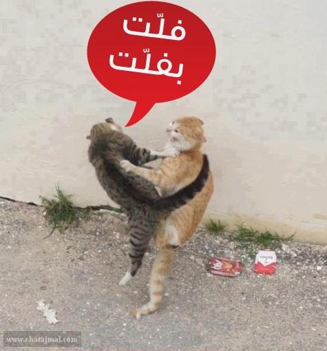 صور حيوانات مضحكة صور مضحكة للحيوانات صور مضحكة للفيس بوك