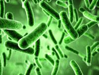 Mikrobiyoloji Ders Notları Pdf