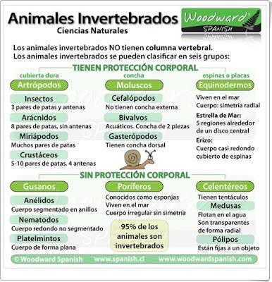 """""""Animales invertebrados"""" (Infografía de Ciencias Naturales de Primaria)"""