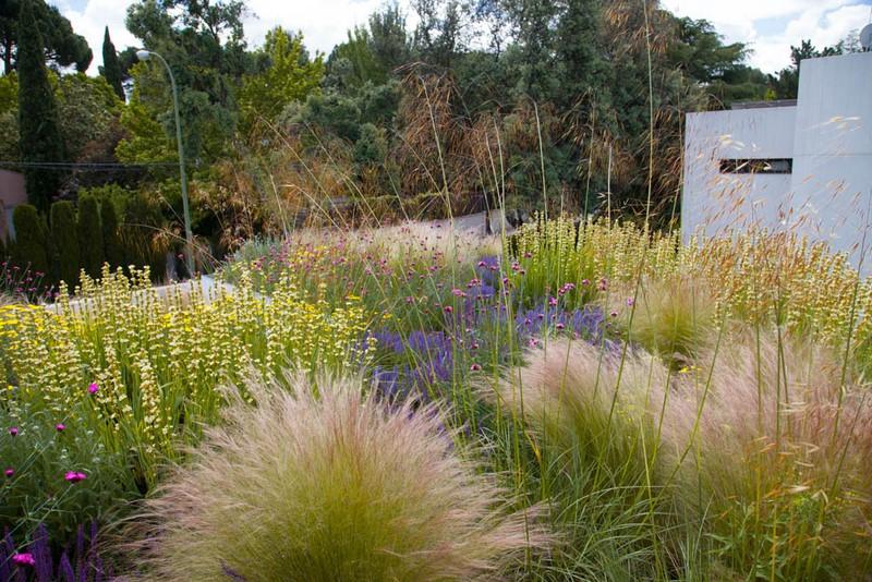 Gramineas y vivaces en cubierta ajardinada en Madrid diseñada por Planta Paisajistas