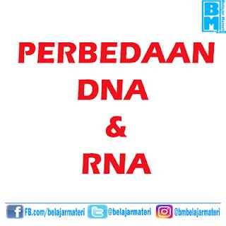 Perbedaan Antara DNA dan RNA Berdasarkan Struktur Dan Fungsinya