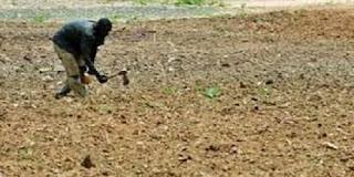 Guinée : Dubreka, Les paysans de Tanènè Bouramayah confrontés à des inondations dans les plaines propices à l'agriculture 2