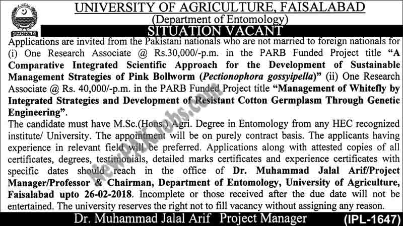 Latest Govt Jobs in University of Agriculture, Faisalabad, Project PARB Funded