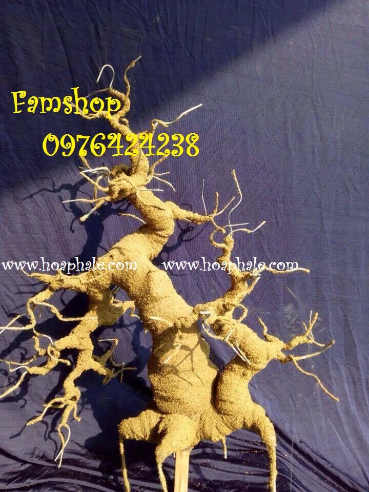 Goc bonsai mai dao tai Le Duc Tho