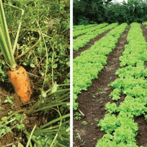 manfaat pupuk organik untuk tanaman