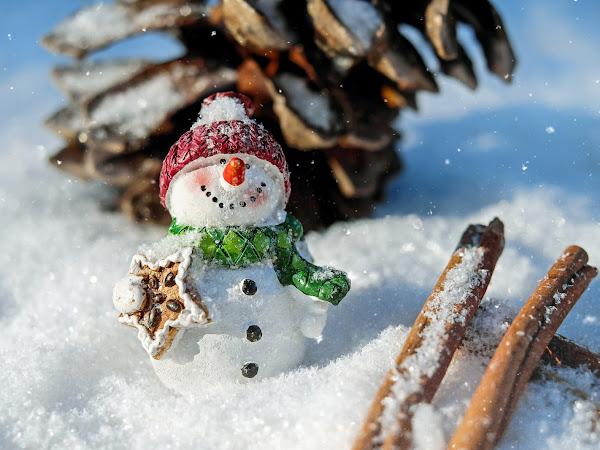 Colleague Gift Guide | Seasonal