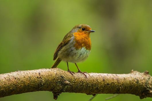 Medio Ambiente crea una orden específica para la regulación de la actividad del silvestrismo