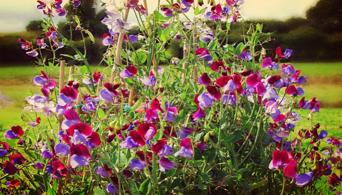 Jardin y plantas