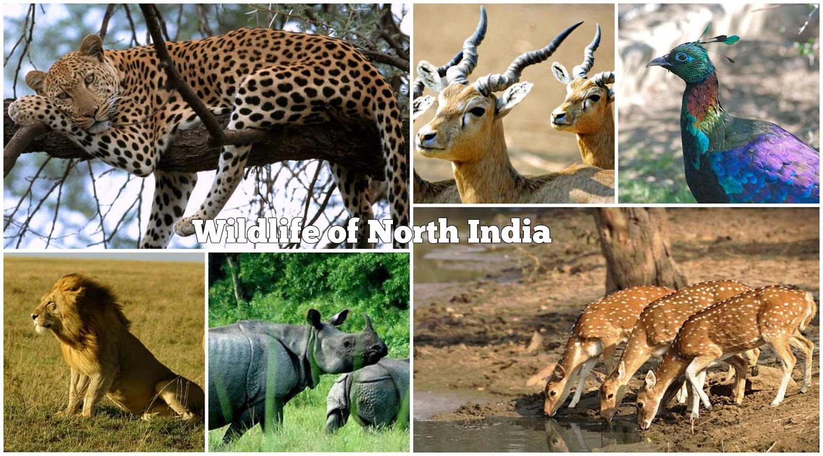 essay on kanha national park Kaziranga national park (pronounced assamese pronunciation: [kaziranga rastriya uɪddan]) is a national park in the golaghat and nagaon districts of.