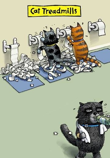 Funny cat toilet paper treadmills cartoon