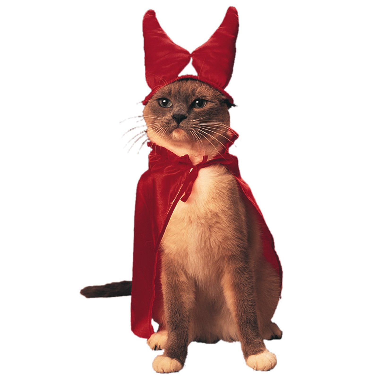 Funny Image Collection: Top Funny Cat Halloween Pictures ...