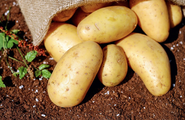 The Proper Weather Climate For Growing Potatoes