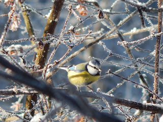vegan gärtnern -Vögel füttern