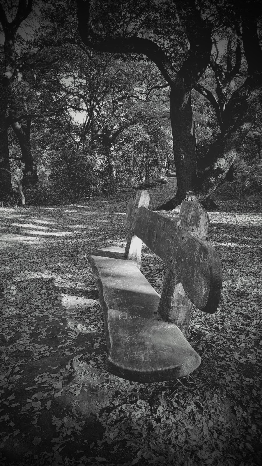 Shadow Shot Sunday: How Cool Is This Bench!?