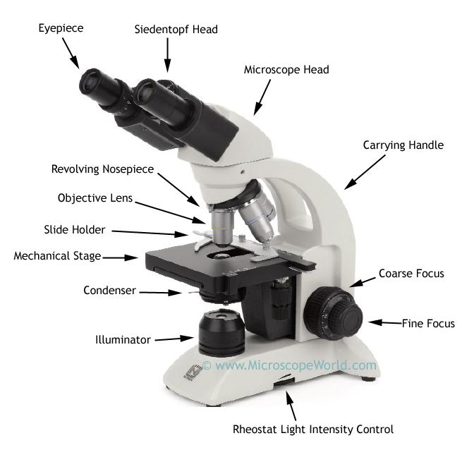 Microscope World Blog: Biological Microscope Parts