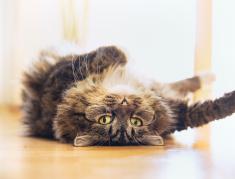Este simple truco ayudara a tu gato a bajar la temperatura durante los días calurosos