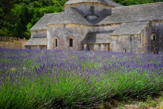 Picture of English Lavender field beside an old church.