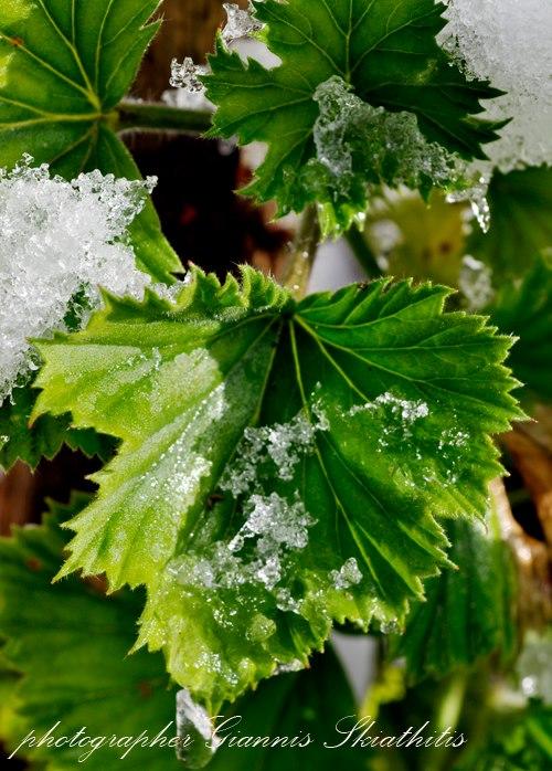 6c10f4f2d7fe Μερικές φορές οι εικόνες που δημιουργεί η φύση είναι επληκτικές. Τα έντονα  χρώματα με το λευκό του χιονιού και το κρυστάλλινο του πάγου δημιουργούν  την ...