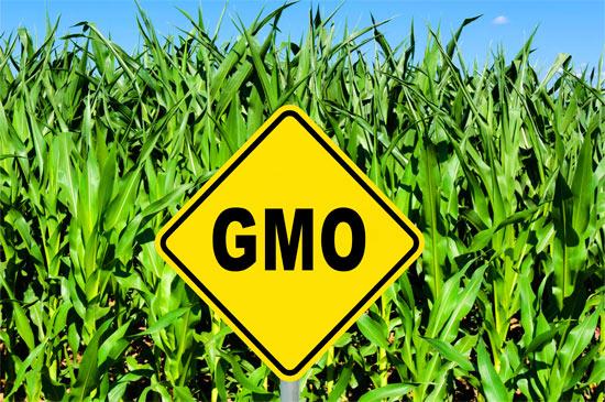 vad är genmodifiering